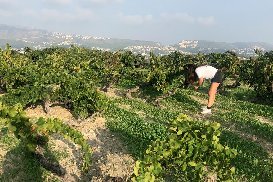 Una mostra dels vins valencians.